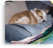 somebody's been sleepin in MY bed.... Canvas Print