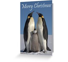Emperor Penguins 1 - Merry Christmas Card Greeting Card