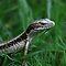 Lizards and salamanders
