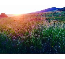 Sun & Grasses Photographic Print