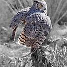 Great Horned Owl - The Great Hunter by LauraStaff