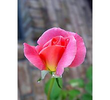 Rosebud and Diamonds Photographic Print