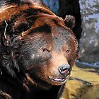 Grizzly Glance by Bob Moore