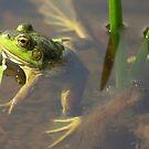 frogspot.com by Brock Hunter