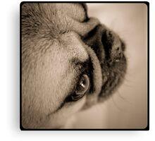 Ti-loup thincking dog Canvas Print