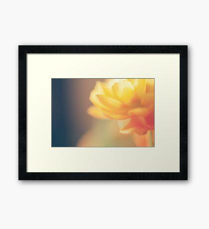 Chinese Rose Framed Print