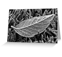 Frost on leaf Greeting Card