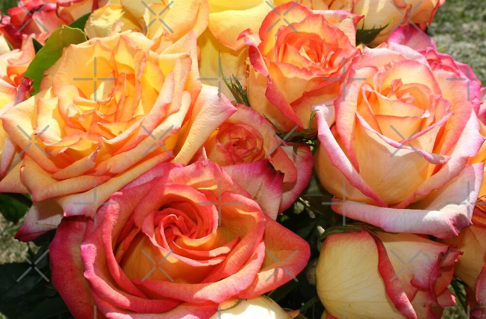 Anniversary Roses by Vickie Emms