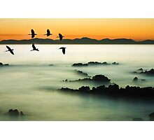 Birds over water Photographic Print