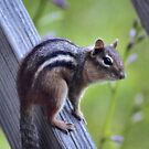 'Chipmunk-on-a-Rail' by Scott Bricker
