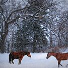 Horses In The Snow by Linda Miller Gesualdo