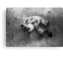 aster the big dag Canvas Print