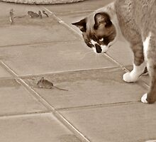 Tom and Jerry ? Nope.....Get Off my Patio!!! by Berns