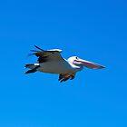 Blue Glider by Bryan Freeman