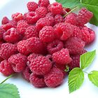 Festive Harvest - Christmas time raspberries in Australia by Bianca Todd