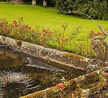 Chillingham Water Garden by Ryan Davison Crisp