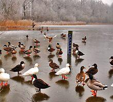 Skating ducks..... by Adri  Padmos
