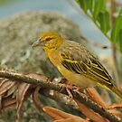 Village Weaver by Robert Abraham