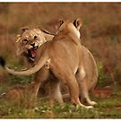 Argument by Leon Rossouw