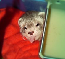 Little rascal Ferret by bigbizarre