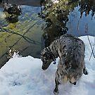 Cheyenne explores snowy creek bank by Edward Henzi