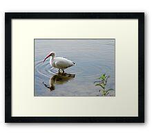 Bird in Meditation Framed Print