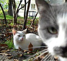 Cats. by Vitta