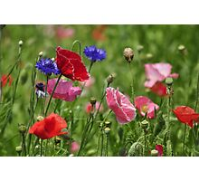 Poppies, As Is Photographic Print