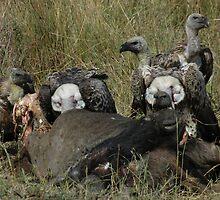 Survival in the Mara, Kenya by Rocky  Robar