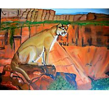 MOUNTAIN LION IN THOUGHT Photographic Print