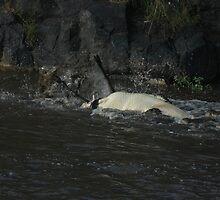 Survival Series, Masai Mara, Kenya 9 by Rocky  Robar