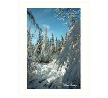 Winter Wonderland in Maine Art Print