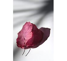 with love Photographic Print