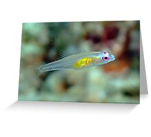 Pink eye goby Greeting Card