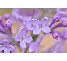 Lilac Macro, As Is Photographic Print