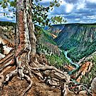 Grand Canyon of the Yellowstone by James Larson