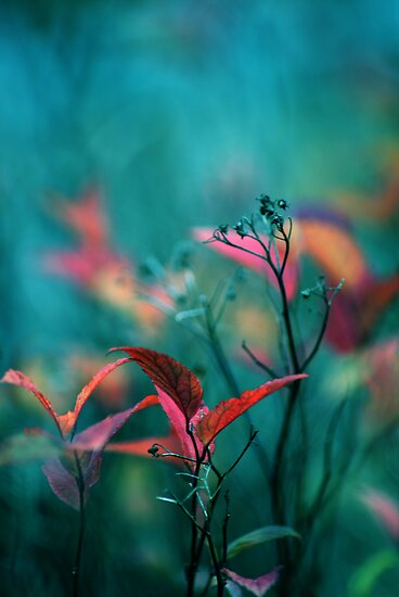 In the Garden by ©Maria Medeiros