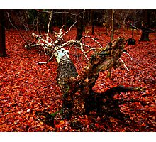 The Death of Medusa in a sea of crimson blood  Photographic Print