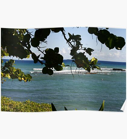hawaii though the trees Poster