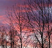 Purple Silhouette by starlitewonder