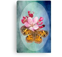 Pearl Crescent Butterfly on Crab Apple Blossom Canvas Print