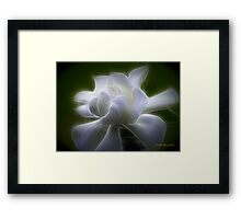 The Gardenia Framed Print