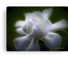 The Gardenia Canvas Print