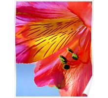 Orange Day Lily Poster