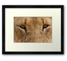 Lioness Eyes Framed Print