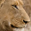 Young Male Lion  by Michael  Moss