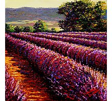 French Provençal Lavender Afternoon Photographic Print