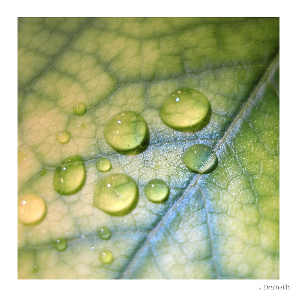 Leaf and Droplets by Jacquelyne Drainville
