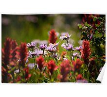 Wildflowers - Lake Caroline Poster