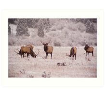Bull Elk, Rocky Mountain National Park Art Print